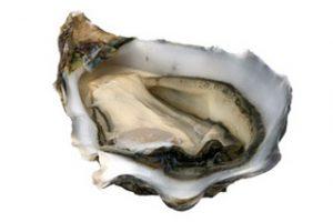 หอยนางรม (Oyster Extract)